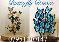 Butterfly Gifts in Victorian Glass Domes